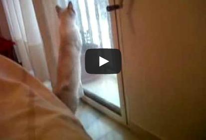 Gato jugando con gotas de lluvia
