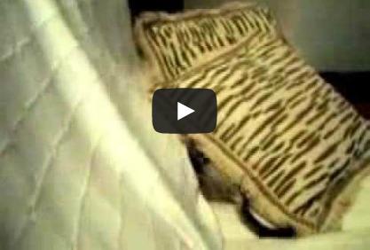 Gato jugando entre cojines