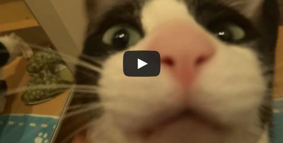 Increíble reacción de un gato que recibe a su dueño