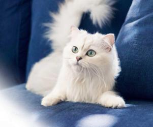Imágenes de gatos blancos