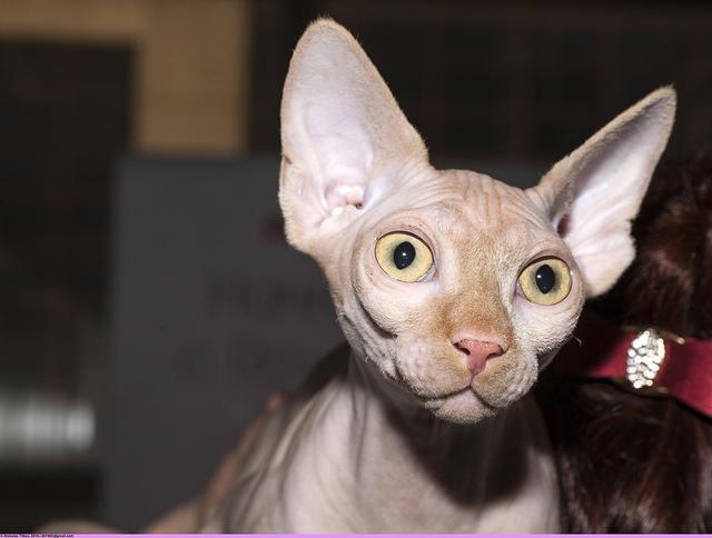 Gatos feos