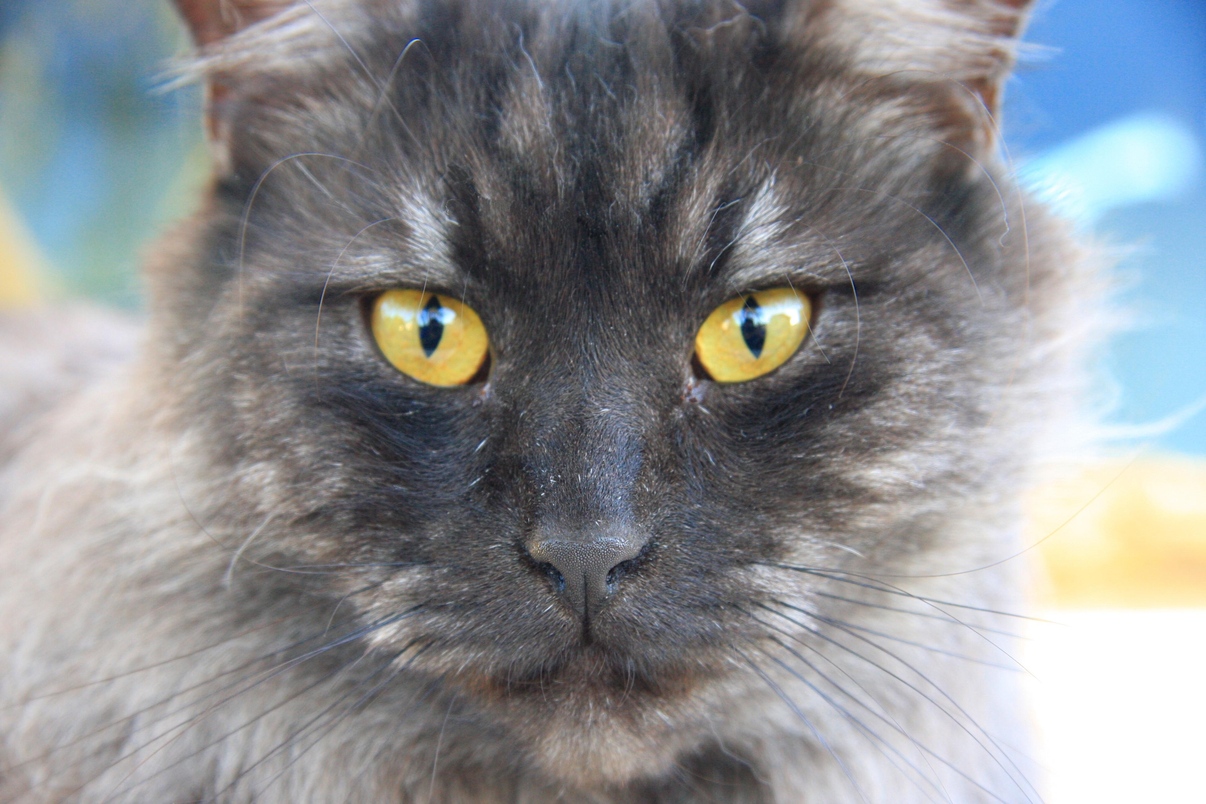 Imagenes de gatos grises