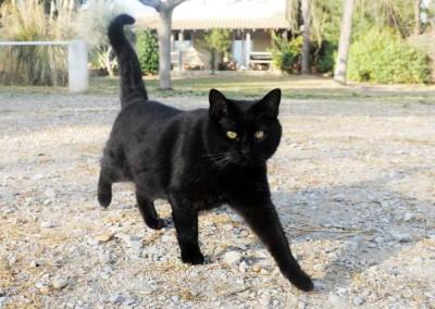 Gato negro en el patio