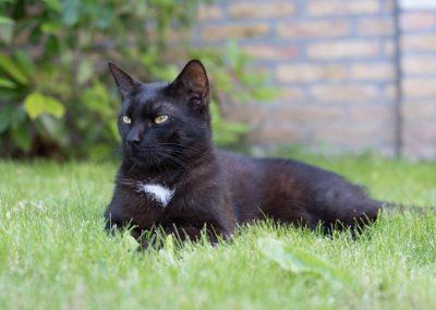 Gato negro en el jardín