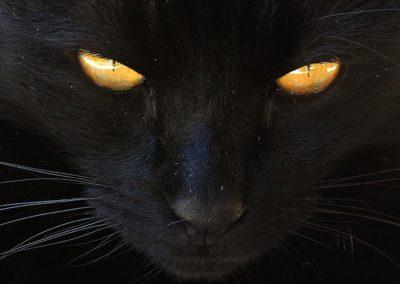 Gato negro con ojos naranja