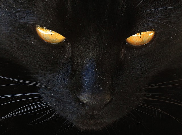 The Witch S Cat Or The Cat Of The Witch