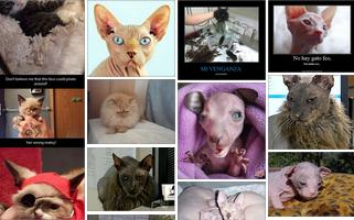 Imagenes de gatos feos