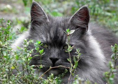 Gato gris en la hierba