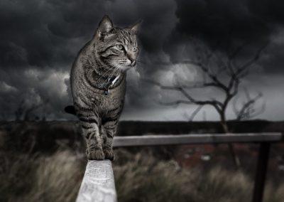 Gato gris - montaje