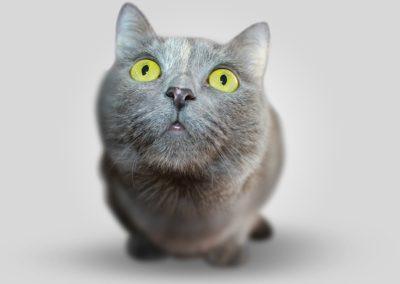 Gato gris de ojos amarillos