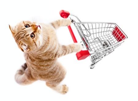 10 mejores tiendas de mascotas online