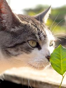 Gato oliendo hoja