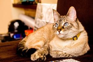 Imagenes de gatos para descargar