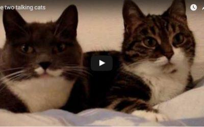 Dos gatos hablando entre sí