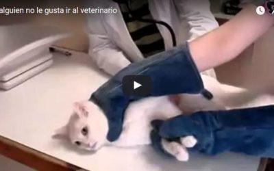 Gato agresivo en el veterinario