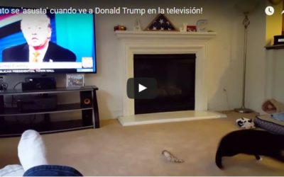 Gato ve a Donald Trump en TV y sale corriendo