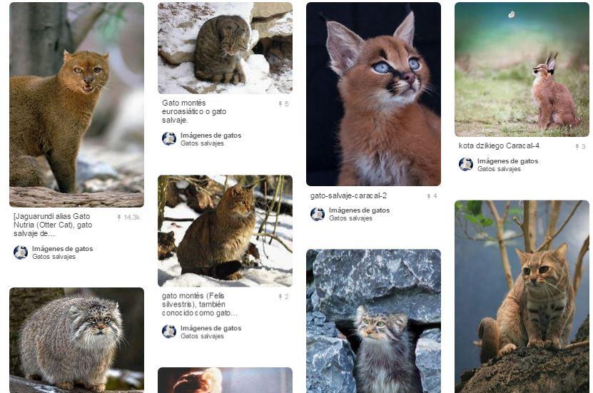 Gatos salvajes