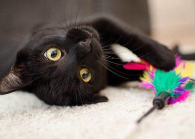 Gato negro con plumero
